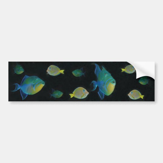 Queen Triggerfish bumper stickers