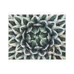 Queen Victoria agave, variegated Canvas Print
