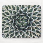 Queen Victoria agave, variegated Mousepad