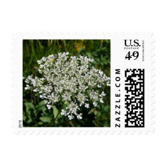 Queens Anne Lace Postage