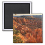'Queen's Garden' hoodoos at sunrise. Bryce 2 Inch Square Magnet