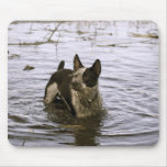 Queensland Heeler Dog Mouse Pad