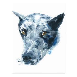 QueensLand Heeler Dog Postcard