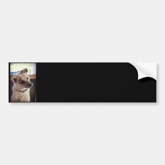 Queensland Heeler Pup Ringo Bumper Sticker