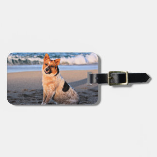 Queensland Red Heeler - Lucy Tag For Luggage