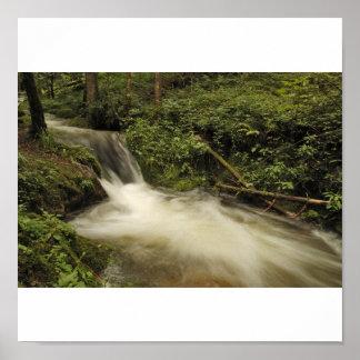Quellwasser frescos en la selva negra póster