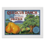 Quercus Ranch Bartlett Pears Posters