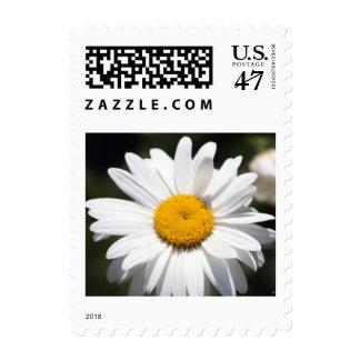 Querido de la margarita timbres postales
