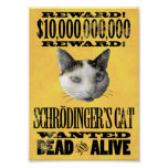 QUERIDO: Poster del CAT de SCHRODINGER