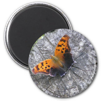 Question Mark Butterfly Magnet