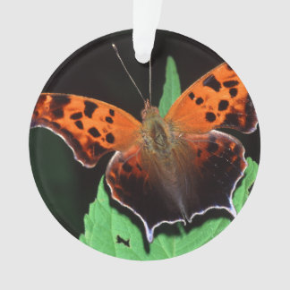 question mark butterfly ornament