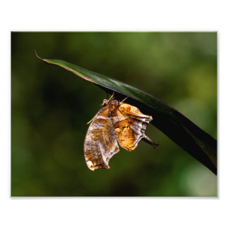Question mark butterfly photo print
