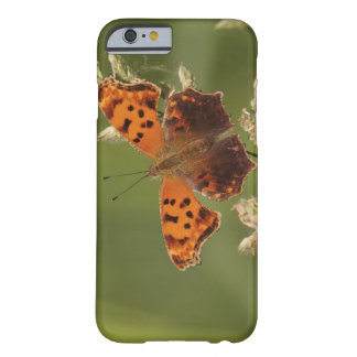 Question Mark butterfly, Polygonia iPhone 6 Case