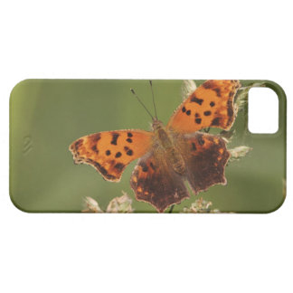 Question Mark butterfly, Polygonia iPhone SE/5/5s Case