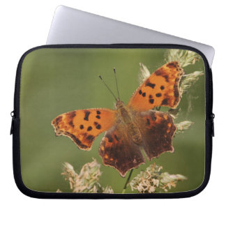 Question Mark butterfly, Polygonia Laptop Sleeve