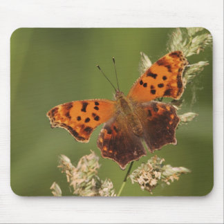 Question Mark butterfly, Polygonia Mouse Pad