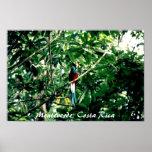 Quetzal, Monteverde, Costa Rica Poster