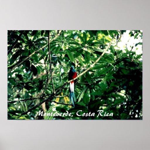 Quetzal, Monteverde, Costa Rica Posters
