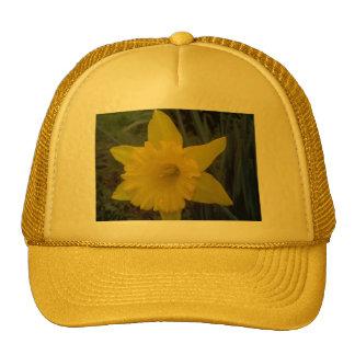 Quick Brown Fox Designs Hat