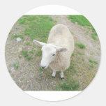 ¿Quién es la oveja que mira? Pegatina Redonda