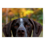 ¿Quién perro de Dat? Tarjeta De Felicitación
