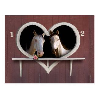¿Quiera al caballo alrededor? Postales
