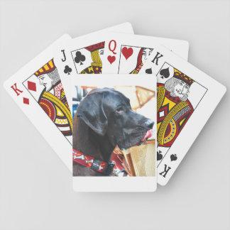 ¿Quiera jugar con mi perro? Cartas De Póquer