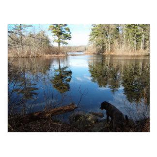 Quiet Cove w/dog ~ postcard