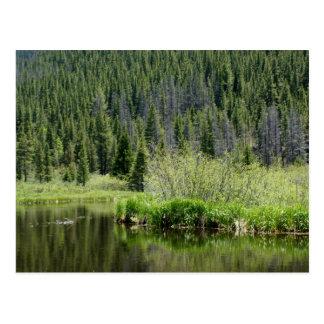 Quiet Fishing Pond postcard, Winter Park, Colorado Postcard