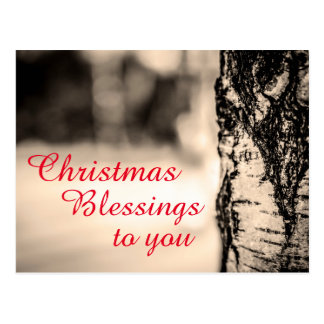 Quiet Peace Rustic Birch Tree Christmas Blessings Postcard