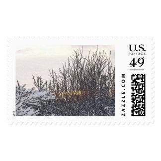 Quiet Stamp