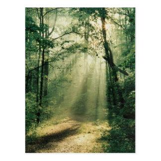 Quiet Walkway Postcard