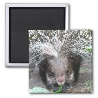 Quilled Porcupine Magnet
