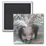 Quilled Porcupine Magnet    Magnets
