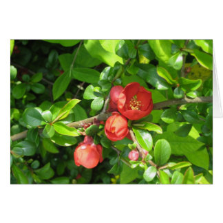 Quince flower greeting cards