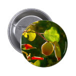Quince Fruit On Tree Pinback Button
