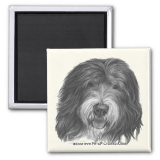 Quincy, Old English Sheepdog 2 Inch Square Magnet