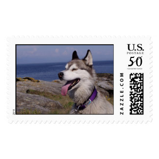 Quinn by the Sea Postage