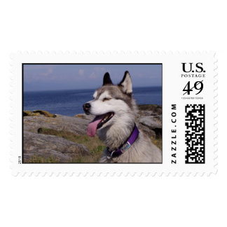 Quinn by the Sea Stamp