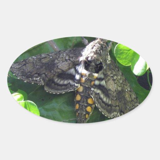 Quinquemaculata de Manduca de polilla de halcón Pegatina Ovalada