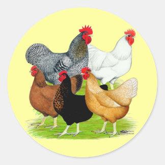 quinteto Sexo-ligado de los pollos Etiquetas Redondas