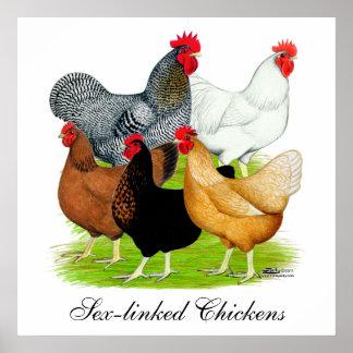 quinteto Sexo-ligado de los pollos Póster