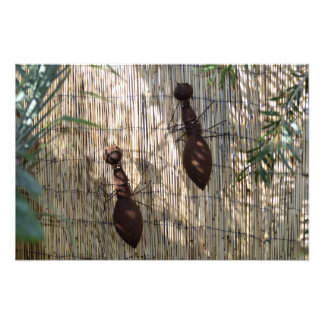 Quirky Ants Photo Print