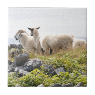 Quirky Designs - Sheep in a field Ceramic Tile