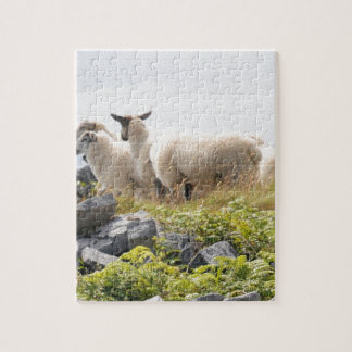 Quirky Designs - Sheep in a field Jigsaw Puzzle