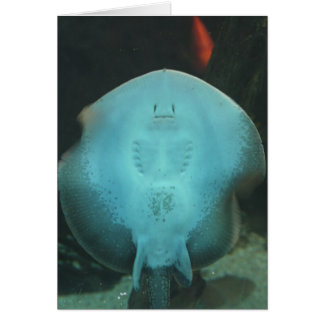 Quirky Manta Ray Greeting Card