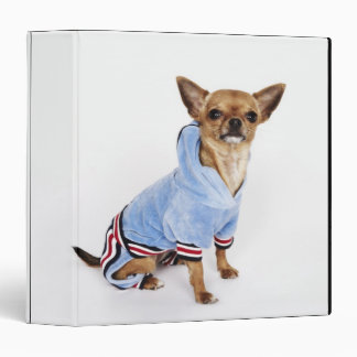 Quirky portrait of a Teacup Chihuahua 2 3 Ring Binder
