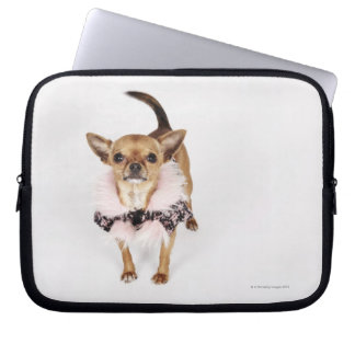 Quirky portrait of a Teacup Chihuahua Computer Sleeve