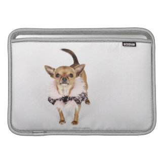Quirky portrait of a Teacup Chihuahua MacBook Sleeve