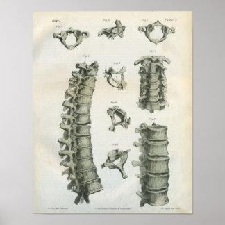 Quiropráctica cervical y torácica de la espina dor posters